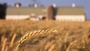 Midwest wheat growers