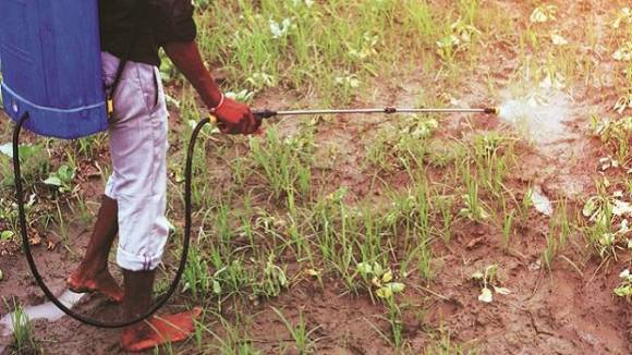 India-crop-protection-application