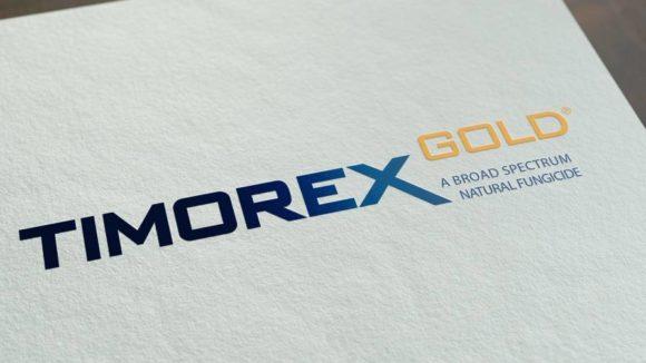 STK-Timorex-Gold
