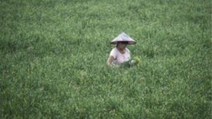china-worker-field